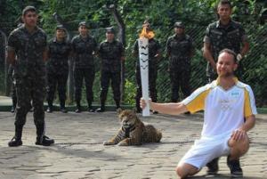 Amazon jaguar shot dead after Olympic torch ceremony