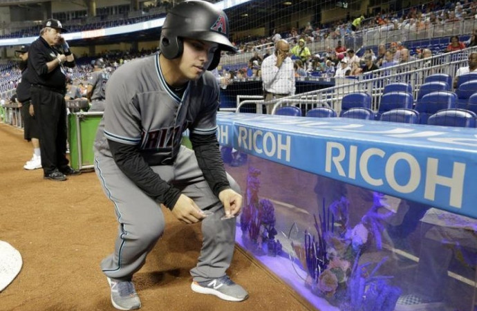 Fish survive after foul ball causes leak in Marlins Park aquarium