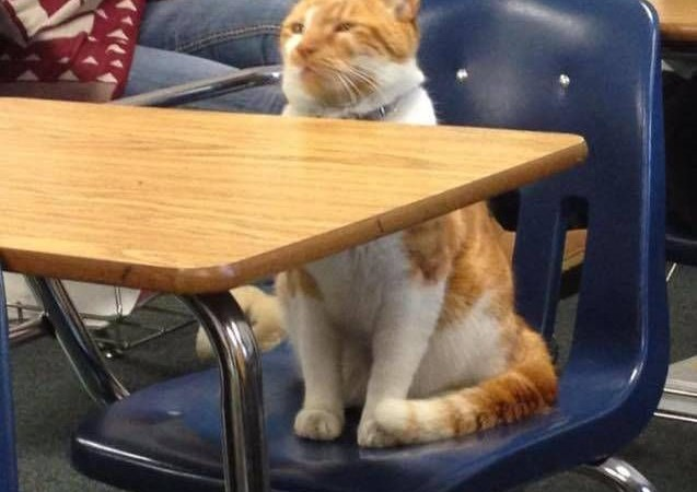 Ginger campus cat Bubba got his own student ID card