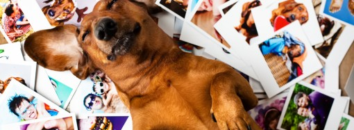 How to make the best dog photos