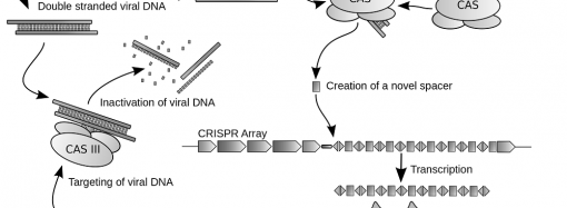 CRISPR Genome Editing: Cure or Curse?