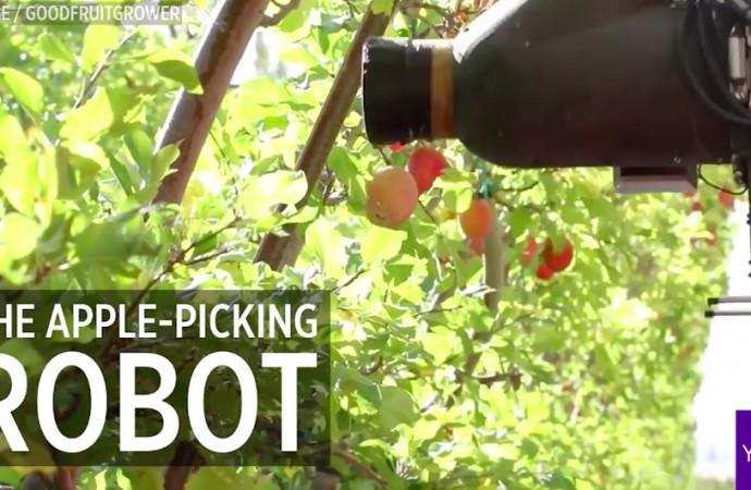 Meet this new apple-picking robot